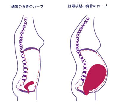 妊娠中 骨盤