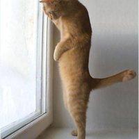 肩こり 猫背